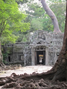 Tree roots sprawling on ground at back exit of Ta Prohm temple
